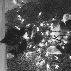 Kitten tangled in Christmas lights
