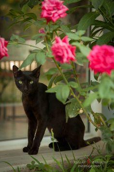 That little black cat.
