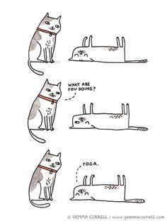 Yoga//cats, posturas gatos