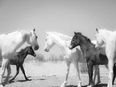 Original Animal Photography by Andrew Lever Equine Photography, Animal Photography, Digital Photography, Art Prints For Sale, Fine Art Prints, Black White Photos, Black And White, Photo Black, Horse Print