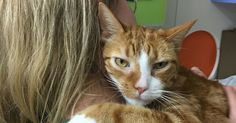 Affectionate Shelter Can't Stop Giving Hugs, But Now He Needs A Family To Share Them With