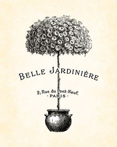 French Topiary Belle Jardiniere Art Print 8x10 by BelleMaisonArt