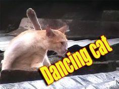 Funny dancing cat