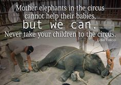 Disgusting! Animals would never choose to be treated like this! Do not support animals being in the circus