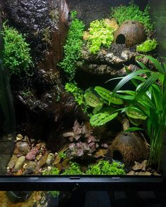 Terrific Photos Reptile Terrarium chameleons Concepts There's no doubt in which possessing a puppy will bring unknown joy for you to a person's life. When the major. Terrariums Gecko, Tree Frog Terrarium, Terrariums Diy, Terrarium Reptile, Aquarium Terrarium, Garden Terrarium, Terrarium Ideas, Chameleon Terrarium, Crested Gecko Vivarium