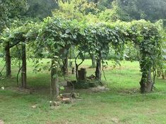 grape fence in front yard - Google Search