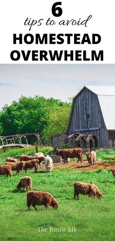 Ready to start your homestead this year? Planning to expand your farm? It can be overwhelming. These 6 tips will help you gain vision and keep things under control so you're not stressed out, overwhelmed and striving to achieve impossible goals.
