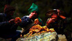En profundos bosques del Himalaya, las abejas más grandes del mundo se ganan la vida produci...