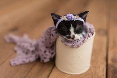 newborn kitten photoshoot