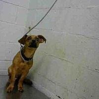 No longer listed Adopt A Pet :: TOY - Atlanta, GA