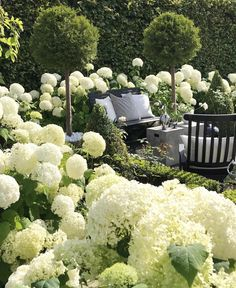 Garten deko ideen - Thank you for sharing my Hydrangea garden Welcome to all . Plants, Cottage Garden, Front Yard Landscaping, White Gardens, Gorgeous Gardens, Urban Garden, Hydrangea Garden, Garden Inspiration, Garden Planning