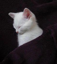 Pocket kitty…