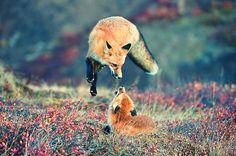 Jumpin´Jack Fox