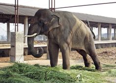 Email: usgrievance@rb.nic.in and phone number is 011 - 23015321 [Extn:] 4625   We need to help Sunder! God did not mean for this poor elephant to be shackled with spikes to keep from moving, and chained to a pole and hit.  Paul McCarthy has written letters against this!  Please get people to write to the Indian government.  please help get Sunder the elephant back into the wild ...Please! For full story:  http://news.msn.com/pop-culture/peta-indian-elephant-still-being-abused