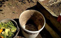 Udați cu această soluție roșiile, castraveții și ardeii – pentru o recoltă bogată! - Pentru Ea Avocado, Home And Garden, Organic, Canning, Tableware, Nature, Diy, House, Plant