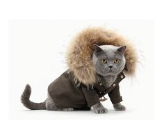 hey rachel did you know hollister makes outerwear for cats now?