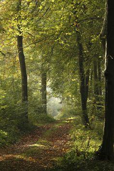Parc Jean Jacques Rousseau, Ermenonville 2010   Venez découvrir les forêts de l'Oise !   © Oise Tourisme / Anne-Sophie FLAMENT Forest Path, Oise, Pathways, Scenery, Country Roads, Anne Sophie, Nature, Plants, Travel