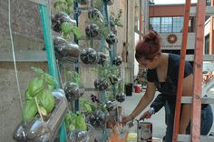 Project School student Izzy Spriggs works on a vertical garden at the school. Photo by Rebecca Townsend.