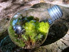 Light Bulb Terrarium, i want these all over my house. they're like little fairy hideaways :)
