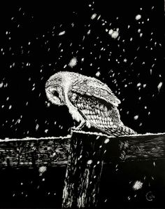 """Snowfall at Night"" by Nathan Cole. Scratch art of a snow owl on a fence post. Art Sketches, Art Drawings, Black Paper Drawing, Scratchboard Art, Scratch Art, Popular Art, Window Art, Owl Art, Chalkboard Art"