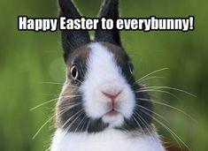 Happy Easter to everybunny easter meme easter quotes easter pictures easter images happy easter happy easter. easter pictures easter memes Happy Easter to everybunny Easter wishes Easter Images Jesus, Funny Easter Pictures, Funny Easter Bunny, Easter Bunny Pictures, Hoppy Easter, Bunny Pics, Easter Eggs, Funniest Pictures, Easter Chick