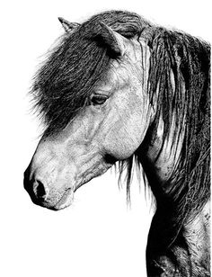 Quick healthy breakfast ideas for diabetics recipes without food Pencil Drawing Tutorials, Pencil Drawings, Horse Pens, Stencils, Icelandic Horse, Drawing Hair, Pointillism, Painting Videos, Stippling