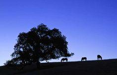 Foxen Canyon Wine Trail, Santa Ynez Valley Santa Ynez Valley, Wine Country, Santa Barbara, Trail, Earth, Places, Lugares, Mother Goddess, World