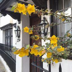 Flowers in London's South Kensington