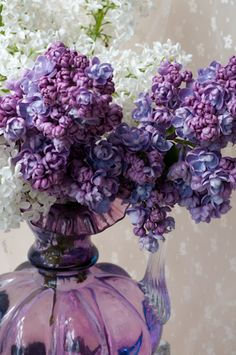 Syringa vulgaris, double purple lilac and white lilac, in antique glass pitcher