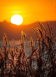 Fall Sunset, gorgeous. @David Nilsson Nilsson Nilsson Howton via Sam Pryor