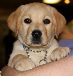 My dog Rookie as a puppy :o.