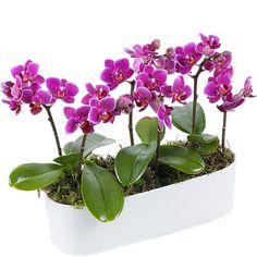 Orchidée - Aquarelle.com Jardin d'orchidées miniatures