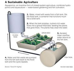 I find this very interesting. Wondering if this would work small scale w/a koi pond and small veg garden
