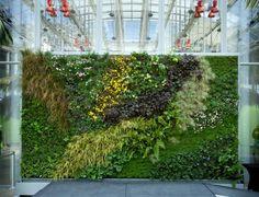 green wall, habitat horticulture living walls + design, vertical garden, living wall, gardening, sustainable design, green design, green building, ethnobotany, david brenner, california academy of sciences