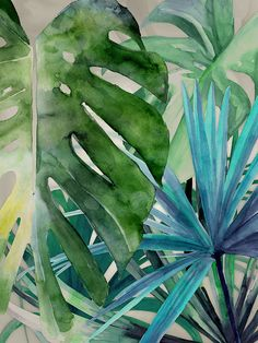 The Urban Road Collection Palm Canyon by Americanflat is a beautifully framed print of gorgeous tropical flora in deep, cool colors, with a matte-white wooden frame and Plexiglas. Certain to enhance any room of your home. Watercolor Print, Watercolour Painting, Watercolor Flowers, Painting & Drawing, Watercolors, Motif Tropical, Tropical Leaves, Tropical Prints, Tropical Style