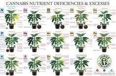 """""""The Cannabis Encyclopedia"""" Book Excerpts – MarijuanaGrowing.com"""