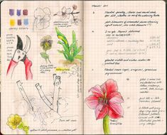What if you create a garden journal this summer?