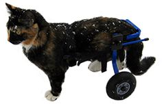 K9 Carts Wheelchairs for Cats have helped thousands of cats regain mobility and independance over the years.   Cat wheelchairs are available in the same sizes and configurations as our dog wheelchairs.
