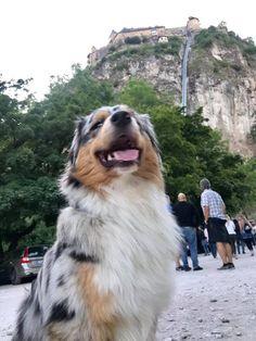 Hunde erlaubt auf der Burg Hochosterwitz in Kärnten. Sehenswürdigkeit in Österreich. Funny Animal Jokes, Funny Animals, Cute Baby Animals, Animals And Pets, Cute Puppies, Doggies, Cute Babies, Wallpaper, Dinosaur Garden