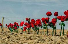 """La asociación de amigos del pueblo saharaui de Talavera presenta: """"Dale voz a las victimas"""", unas jornadas que se celebrarán el 27 de febrero - 45600mgzn"""