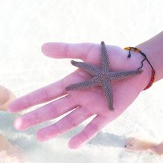 A starfish in the hand is worth...    #nautical photography #beach #sealife