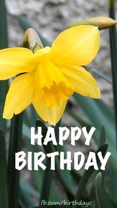 Yellow flower birthday gif message