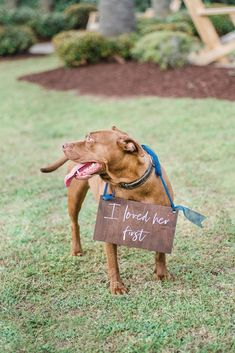 Your ring bearer whether theyre pup or human will look adorable carrying this sign down the aisle or just chewing on it. Wedding Vows, Wedding Signs, Dream Wedding, Wedding Ideas, Wedding Hair, Wedding Planning, Dog Wedding Dress, Wedding Cakes, Wedding Advice