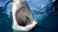 SHARK WEEK!!!  Its the best time of the year...take vacation time and see for yourself (I do).