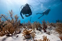 Scientists check on the nursery coral
