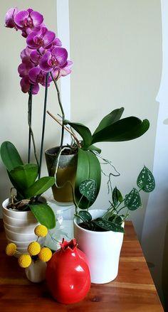 Plants Oct 11, Dec 8, Condo Living, Plants, Inspiration, Biblical Inspiration, Condominium, Plant, Inspirational
