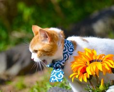 Kittens Cutest, Cats And Kittens, Cute Cats Photos, Japanese Cat, Red Cat, Feral Cats, Domestic Cat, Cat Cafe, I Love Cats