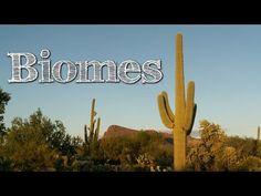 Biomes of the World for Children: Oceans, Mountains, Grassland, Rainforest, Desert - FreeSchool - YouTube