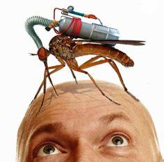 Prevention of Dengue
