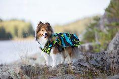 Rukka Raincoats, overalls, fleecewear, and knitwear for dogs Pet Clothes, Doggies, Husky, Raincoat, Spring Summer, Pets, Animals, Little Puppies, Rain Jacket